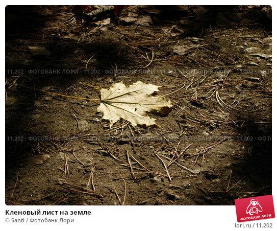 Кленовый лист на земле, фото № 11202, снято 2 октября 2005 г. (c) Santi / Фотобанк Лори