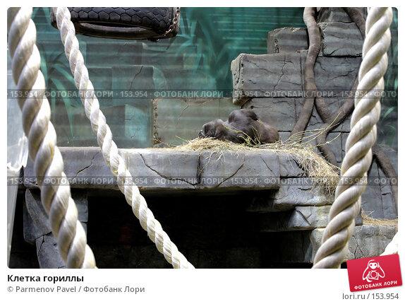 Клетка гориллы, фото № 153954, снято 11 декабря 2007 г. (c) Parmenov Pavel / Фотобанк Лори