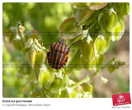 Купить «Клоп на растении», фото № 18318, снято 13 июня 2006 г. (c) Сергей Ксейдор / Фотобанк Лори