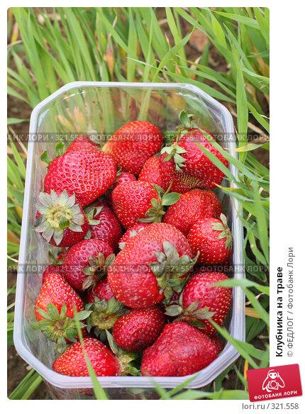 Клубника на траве, фото № 321558, снято 13 июня 2008 г. (c) ФЕДЛОГ.РФ / Фотобанк Лори