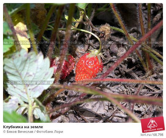 Купить «Клубника на земле», фото № 68798, снято 26 июля 2007 г. (c) Бяков Вячеслав / Фотобанк Лори