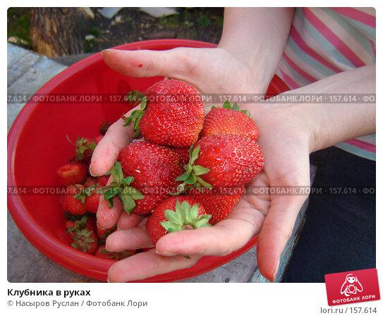 Купить «Клубника в руках», фото № 157614, снято 30 июня 2007 г. (c) Насыров Руслан / Фотобанк Лори