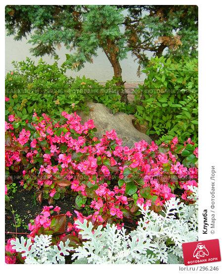 Клумба, фото № 296246, снято 18 июля 2007 г. (c) Мара / Фотобанк Лори