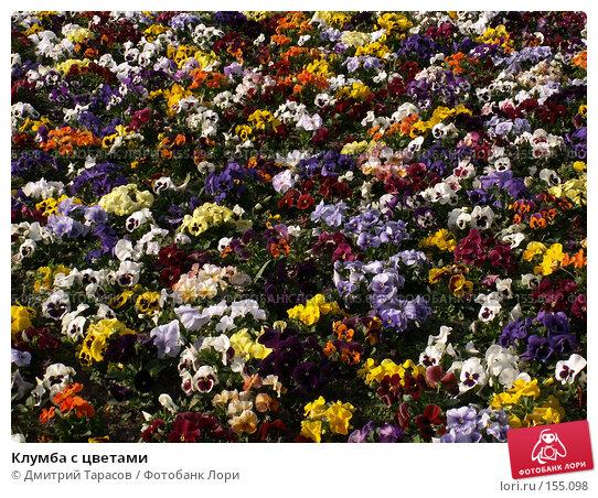 Купить «Клумба с цветами», фото № 155098, снято 4 июня 2006 г. (c) Дмитрий Тарасов / Фотобанк Лори
