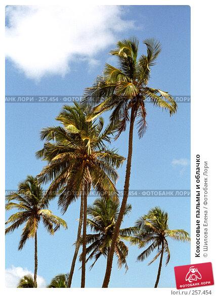 Купить «Кокосовые пальмы и облачко», фото № 257454, снято 23 апреля 2018 г. (c) Шилова Елена / Фотобанк Лори