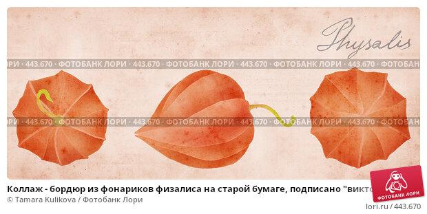 """Купить «Коллаж - бордюр из фонариков физалиса на старой бумаге, подписано """"викторианским"""" почерком - """"Physalis""""», иллюстрация № 443670 (c) Tamara Kulikova / Фотобанк Лори"""