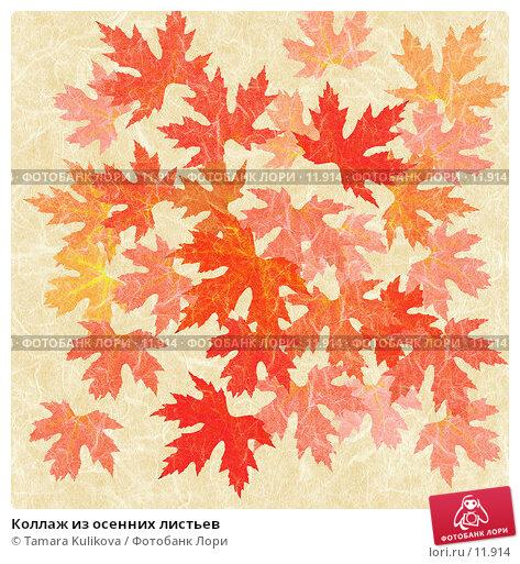 Коллаж из осенних листьев, иллюстрация № 11914 (c) Tamara Kulikova / Фотобанк Лори