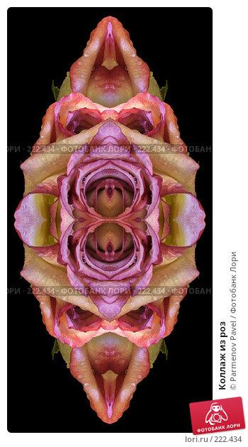 Коллаж из роз, иллюстрация № 222434 (c) Parmenov Pavel / Фотобанк Лори