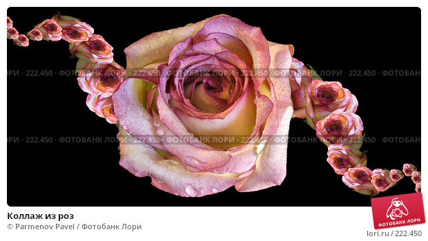 Коллаж из роз, иллюстрация № 222450 (c) Parmenov Pavel / Фотобанк Лори
