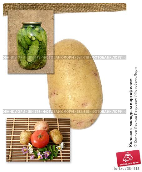 переносят сухой коллаж на тему картофель фото большими белыми