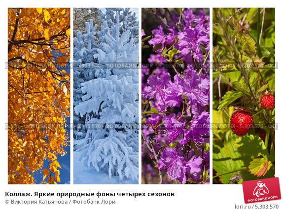 Купить «Коллаж. Яркие природные фоны четырех сезонов», фото № 5303570, снято 25 ноября 2013 г. (c) Виктория Катьянова / Фотобанк Лори