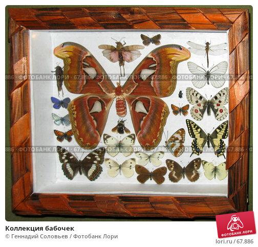 Коллекция бабочек, фото № 67886, снято 8 июля 2007 г. (c) Геннадий Соловьев / Фотобанк Лори