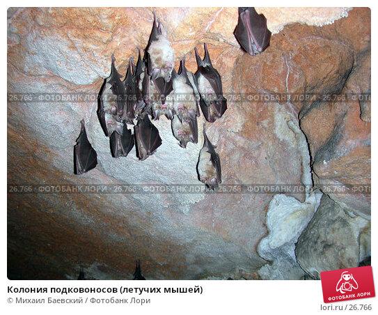 Колония подковоносов (летучих мышей), фото № 26766, снято 25 декабря 2005 г. (c) Михаил Баевский / Фотобанк Лори