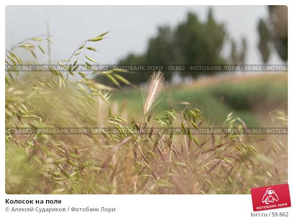 Колосок на поле, фото № 59862, снято 28 мая 2007 г. (c) Алексей Судариков / Фотобанк Лори