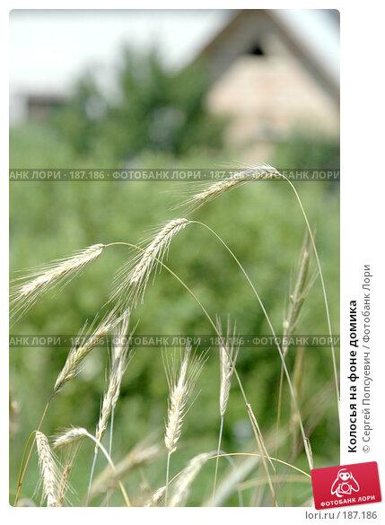Колосья на фоне домика, фото № 187186, снято 9 июля 2005 г. (c) Сергей Попсуевич / Фотобанк Лори