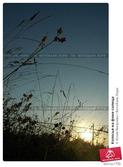 Колосья на фоне солнца, фото № 770, снято 5 августа 2005 г. (c) Юлия Яковлева / Фотобанк Лори