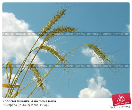 Колосья пшеницы на фоне неба, фото № 162706, снято 1 июля 2007 г. (c) Петрова Ольга / Фотобанк Лори