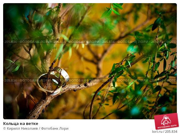 Кольца на ветке, фото № 205834, снято 5 августа 2007 г. (c) Кирилл Николаев / Фотобанк Лори