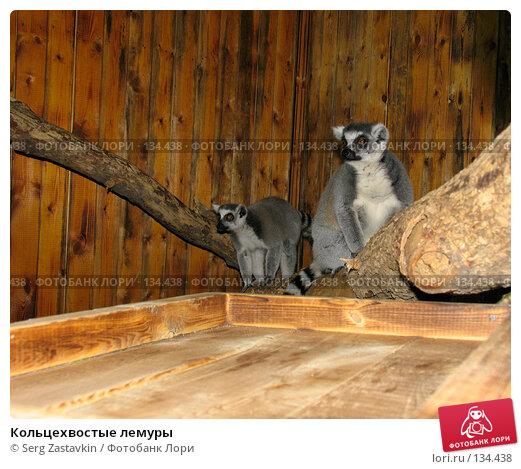 Кольцехвостые лемуры, фото № 134438, снято 10 октября 2004 г. (c) Serg Zastavkin / Фотобанк Лори