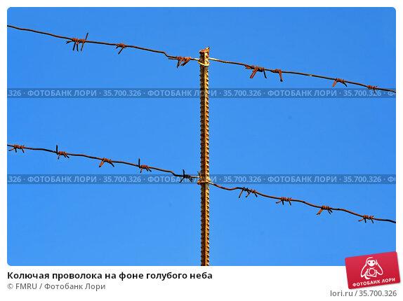 Колючая проволока на фоне голубого неба. Стоковое фото, фотограф FMRU / Фотобанк Лори