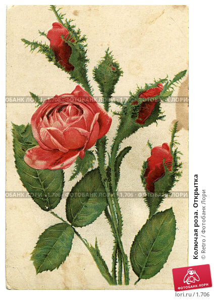 Купить «Колючая роза. Открытка», фото № 1706, снято 22 марта 2018 г. (c) Retro / Фотобанк Лори