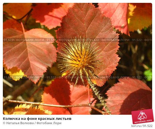 Колючка на фоне красных листьев, фото № 91522, снято 2 октября 2007 г. (c) Наталья Волкова / Фотобанк Лори
