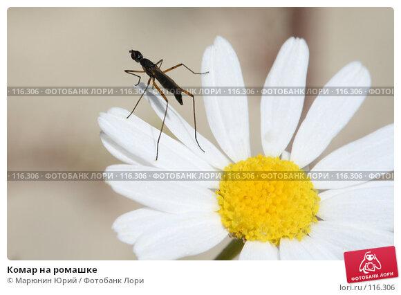 Комар на ромашке, фото № 116306, снято 11 августа 2007 г. (c) Марюнин Юрий / Фотобанк Лори