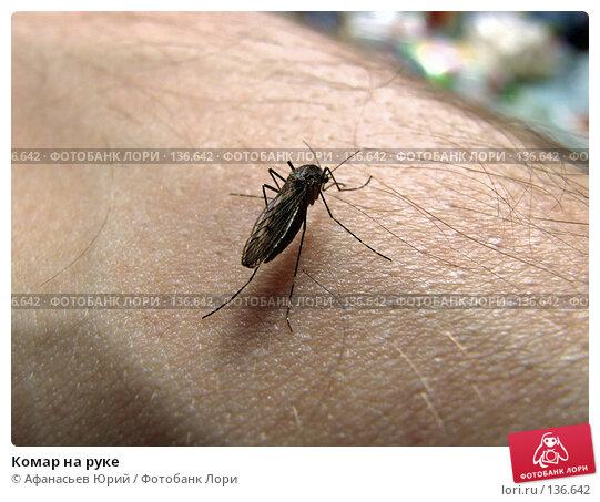 Комар на руке, фото № 136642, снято 4 декабря 2016 г. (c) Афанасьев Юрий / Фотобанк Лори
