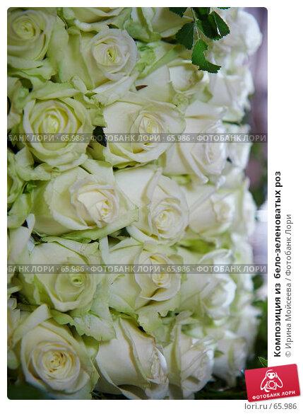 Композиция из  бело-зеленоватых роз, эксклюзивное фото № 65986, снято 21 июля 2007 г. (c) Ирина Мойсеева / Фотобанк Лори