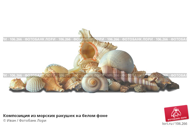 Композиция из морских ракушек на белом фоне, фото № 106266, снято 30 марта 2007 г. (c) Иван / Фотобанк Лори