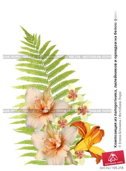 Композиция из папоротника, лилейников и орхидеи на белом фоне, фото № 105218, снято 24 октября 2016 г. (c) Елена Блохина / Фотобанк Лори