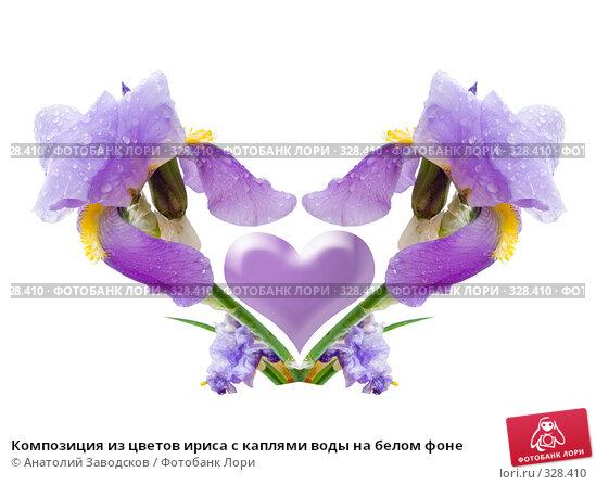 Композиция из цветов ириса с каплями воды на белом фоне, фото № 328410, снято 28 мая 2006 г. (c) Анатолий Заводсков / Фотобанк Лори