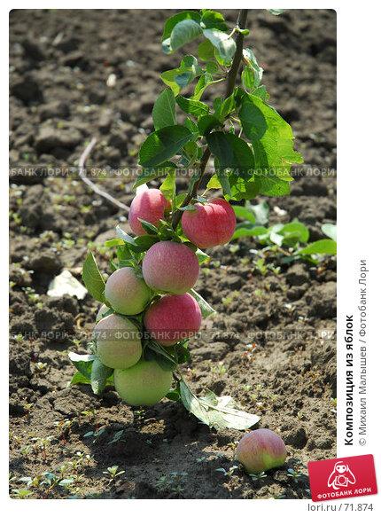 Композиция из яблок, фото № 71874, снято 26 июля 2007 г. (c) Михаил Малышев / Фотобанк Лори