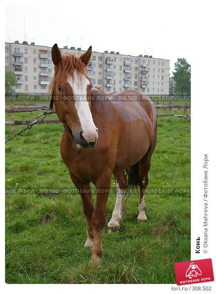 Конь, фото № 308502, снято 18 мая 2008 г. (c) Oksana Mahrova / Фотобанк Лори