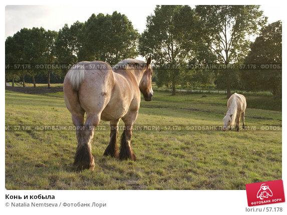 Купить «Конь и кобыла», эксклюзивное фото № 57178, снято 28 июня 2007 г. (c) Natalia Nemtseva / Фотобанк Лори