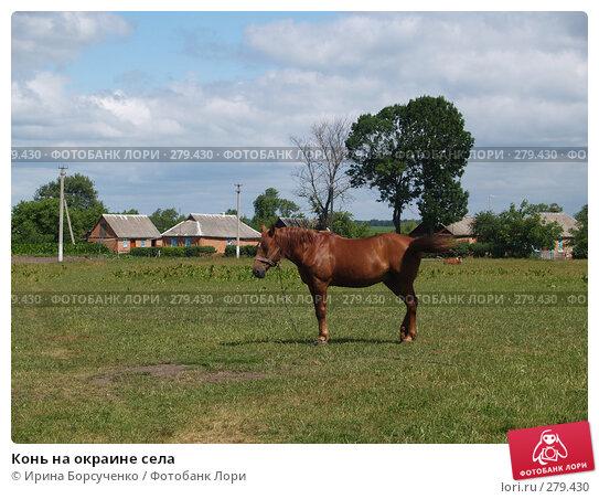 Купить «Конь на окраине села», фото № 279430, снято 20 июня 2007 г. (c) Ирина Борсученко / Фотобанк Лори