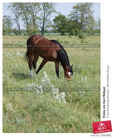 Конь на пастбище, фото № 334866, снято 24 мая 2017 г. (c) Константин Босов / Фотобанк Лори