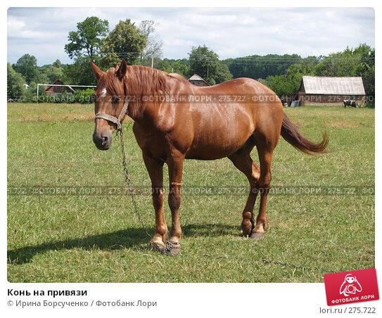 Конь на привязи, фото № 275722, снято 20 июня 2007 г. (c) Ирина Борсученко / Фотобанк Лори