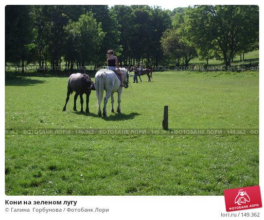 Кони на зеленом лугу, фото № 149362, снято 18 мая 2006 г. (c) Галина  Горбунова / Фотобанк Лори