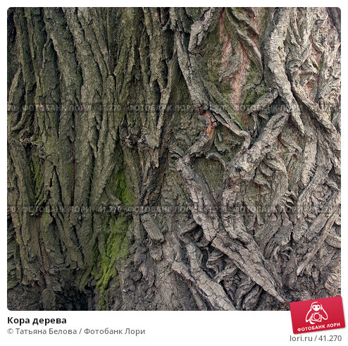 Купить «Кора дерева», эксклюзивное фото № 41270, снято 27 апреля 2007 г. (c) Татьяна Белова / Фотобанк Лори