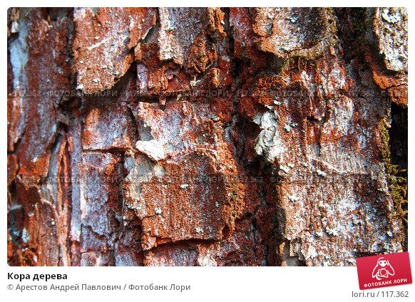 Кора дерева, фото № 117362, снято 8 октября 2006 г. (c) Арестов Андрей Павлович / Фотобанк Лори