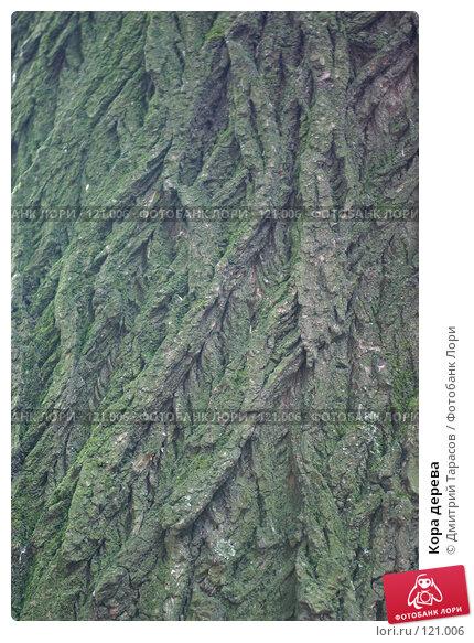 Кора дерева, фото № 121006, снято 10 июля 2007 г. (c) Дмитрий Тарасов / Фотобанк Лори