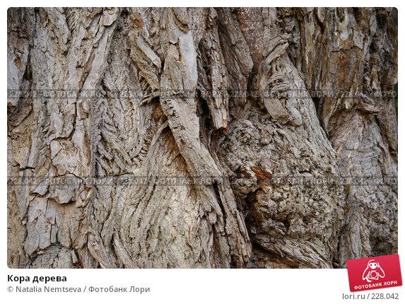 Кора дерева, эксклюзивное фото № 228042, снято 18 марта 2008 г. (c) Natalia Nemtseva / Фотобанк Лори