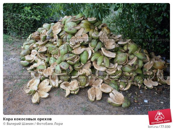 Кора кокосовых орехов, фото № 77030, снято 17 июня 2007 г. (c) Валерий Шанин / Фотобанк Лори