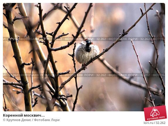 Коренной москвич..., фото № 32262, снято 13 марта 2007 г. (c) Крупнов Денис / Фотобанк Лори