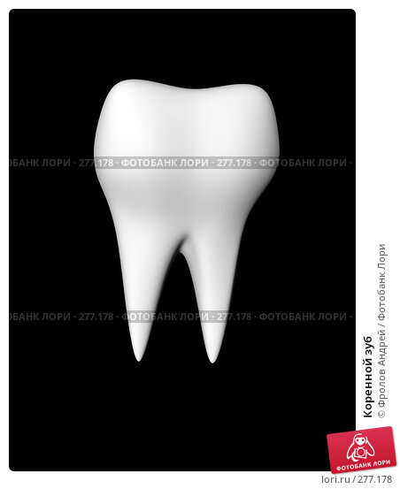 Коренной зуб, фото № 277178, снято 27 апреля 2017 г. (c) Фролов Андрей / Фотобанк Лори