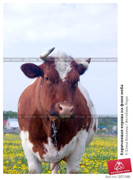Коричневая корова на фоне неба, фото № 297046, снято 19 мая 2008 г. (c) Елена Блохина / Фотобанк Лори