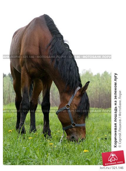 Коричневая лошадь на зеленом лугу, фото № 321146, снято 18 мая 2008 г. (c) Сергей Лешков / Фотобанк Лори