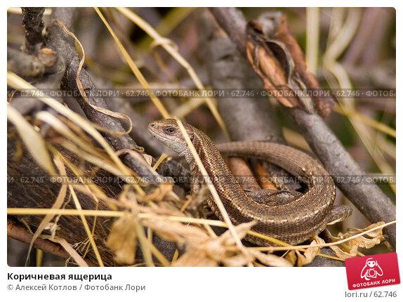 Коричневая ящерица, эксклюзивное фото № 62746, снято 14 июля 2007 г. (c) Алексей Котлов / Фотобанк Лори