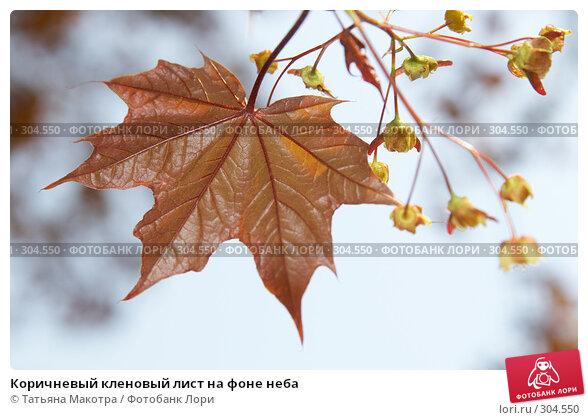 Коричневый кленовый лист на фоне неба, фото № 304550, снято 29 апреля 2008 г. (c) Татьяна Макотра / Фотобанк Лори